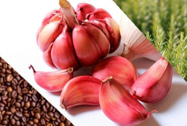 Extractos de café, ajo y romero para inhibir crecimiento bacteriano