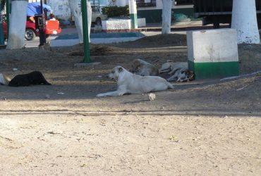 Los perros callejeros, un problema de conciencia ciudadana