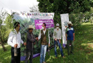 Continúa campaña de reforestación en Morelos
