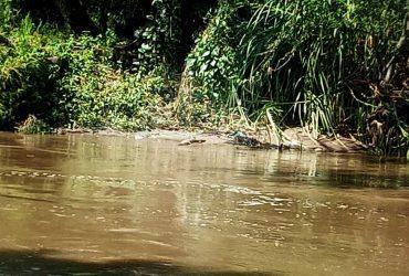 Alertan sobre presencia de cocodrilos sobre el río Apatlaco, a la altura de Xoxocotla